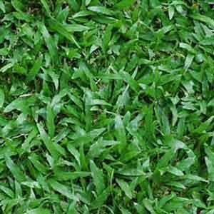Gạch lát sân vườn 40x40 Đồng Tâm 4040CLG001